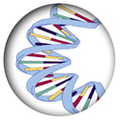 DNA Cerchiato.png