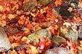 DO Fall (7303262282) (2).jpg