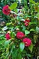 Dahlia Flowers (11).jpg