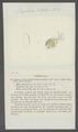 Daphnia vetula - - Print - Iconographia Zoologica - Special Collections University of Amsterdam - UBAINV0274 099 06 0007.tif