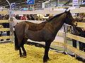 Dartmoor01 SDA2010.JPG