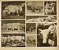 Das thierleben in Schönbrunn (Plate 45) (6096784062).jpg