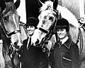 Day 99 – Police horses and female riders (8634351058).jpg