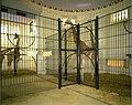 De dierentuin, Egyptische tempel, interieur - de giraffenkooien - 358553 - onroerenderfgoed.jpg