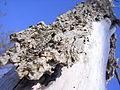 Dead tree bark.jpg