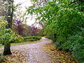 Delft park in autumn 4.JPG