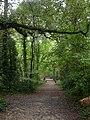 Delph Woods, track - geograph.org.uk - 1551620.jpg