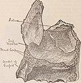 Dental cosmos (1889) (14595327677).jpg