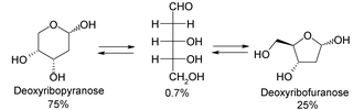 Deoxyribose - Chemical equilibrium of deoxyribose in solution