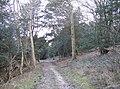 Descent through Compton Down Wood - geograph.org.uk - 355997.jpg