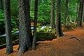 Deschutes National Forest Head of Jack Creek (36696228820).jpg