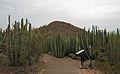 Desert Botanical Garden, Phoenix (8226714954).jpg
