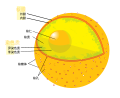 Diagram human cell nucleus (zh-cn).svg