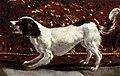 Diego Velázquez - Joseph's Bloody Coat Brought to Jacob (detail) - WGA24379.jpg