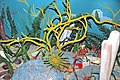 Diorama of a Devonian seafloor 10 (30682889097).jpg