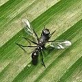 Diptera (15585225510).jpg