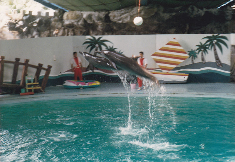 a dolphin show / ocean attraction at ancol  dreamland amusement park
