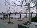 Dongying, Shandong, China - panoramio (557).jpg