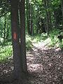 Donut Hole Trail Blaze.JPG