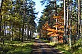 Droga leśna - panoramio (1).jpg