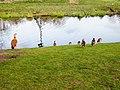 Ducks In The Park (140454711).jpeg