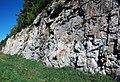 Dunham Dolomite (Lower Cambrian; Route 2 roadcut, southeast of the Lamoille River bridge, Vermont, USA) 16.jpg