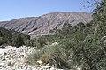 Dunst Oman scan0151 - Wadi Ende.jpg