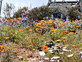 Eden Prairie Flowers.jpg