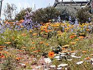Eden Prairie Flowers