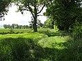 Edge of Moornook Wood - geograph.org.uk - 863552.jpg
