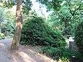 Efeu neuer friedfhof friedrichsfelde 2018 05 26 (2).jpg