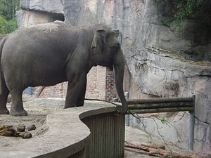 Audubon Zoo - This is one of two elephants at the Audubon Zoo in New Orleans.