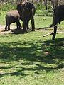 Elephantsinmtr.jpg