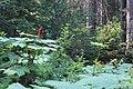 Emerald Lake IMG 5120.JPG