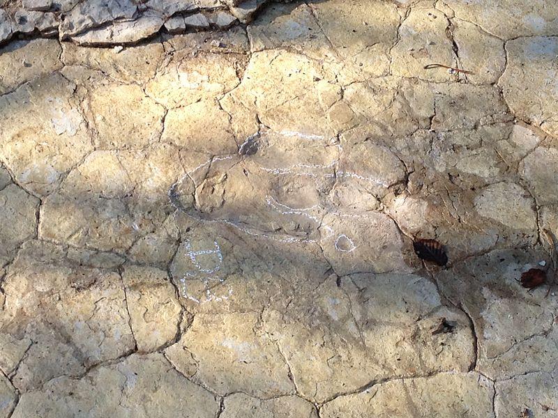 Empreinte de theropode sur la commune de Plagne (Ain), sur le site de «Dinoplagne»