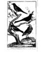 Encyclopedie volume 5-078.png