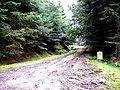 Entrance to wood near Balfour - geograph.org.uk - 966339.jpg
