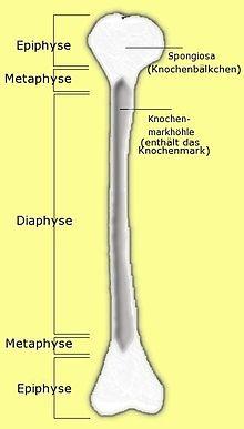 Métaphyse