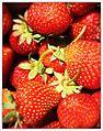 Erdbeeren 2.jpg