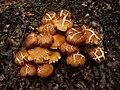 Err... Some Mushroom (3260872841).jpg