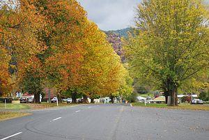 Eskdale, Victoria - Autumn foliage in the Main Street