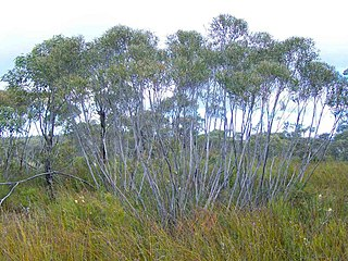 Yathong Nature Reserve Protected area in New South Wales, Australia