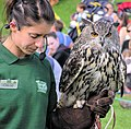 Eurasian eagle owl and handler arp.jpg