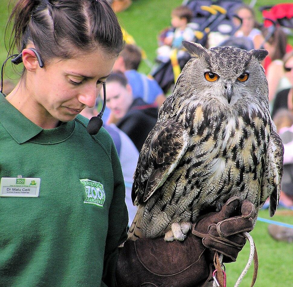 Eurasian eagle owl and handler arp