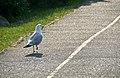 Evening Stroll (2705681499).jpg