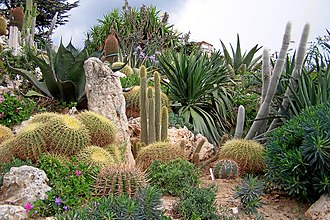 Succulent plant - A collection of succulent plants, including cacti, from the Jardin botanique d'Èze, France