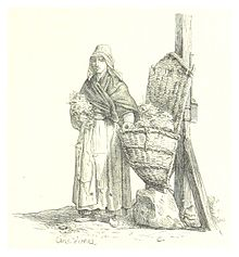 Frauenmantel latein