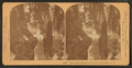 Fairy-land, Magnolia Cemetery, Charleston, S.C, from Robert N. Dennis collection of stereoscopic views 2.png