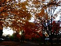 Fall Colors in Madison - panoramio (9).jpg