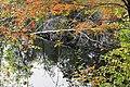 Fall Reflections (15436273886).jpg